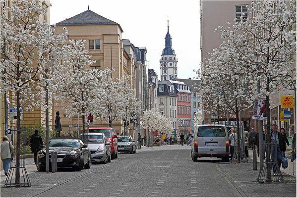 Stadt Gera - Magnolienblüte in der Schloßstrasse