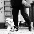 Stadt-Hund