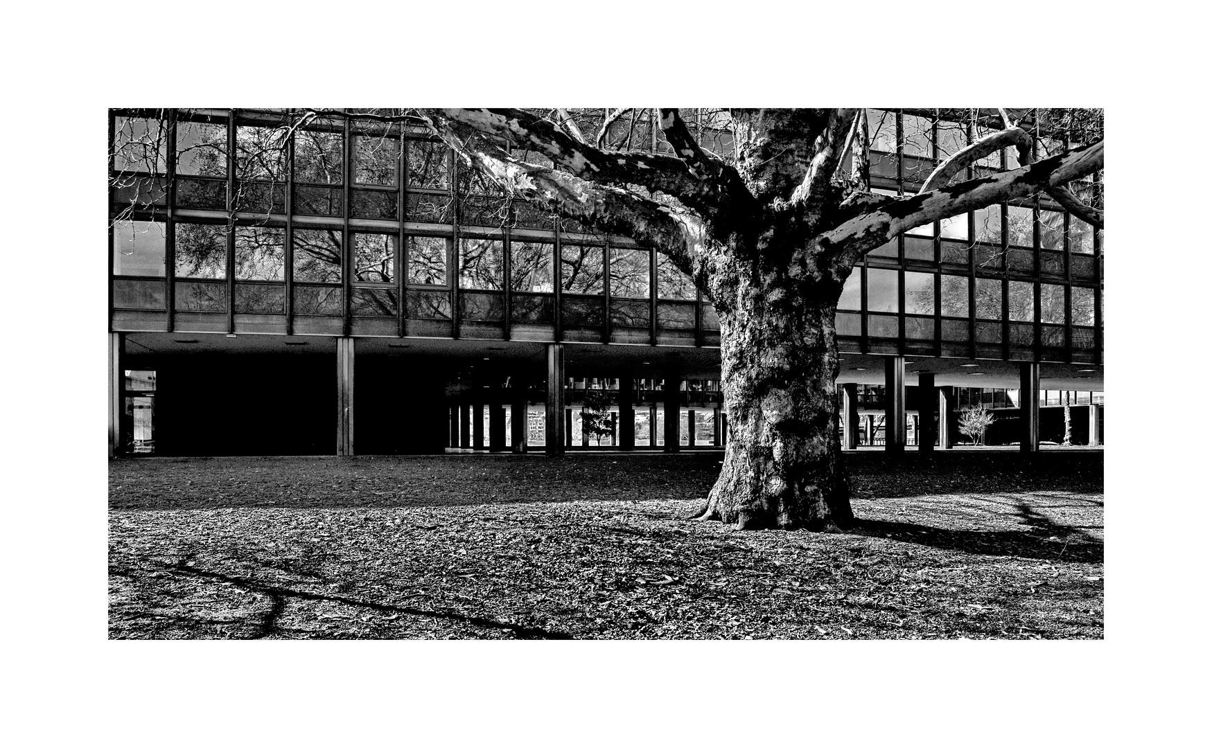 stadtbäume 21