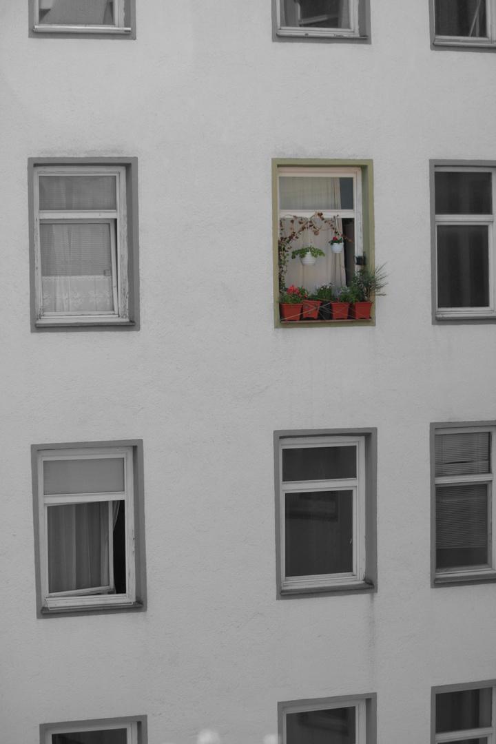 stadtfenster