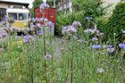 Stadtgarten 11