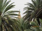 Stadtgarten Palermo