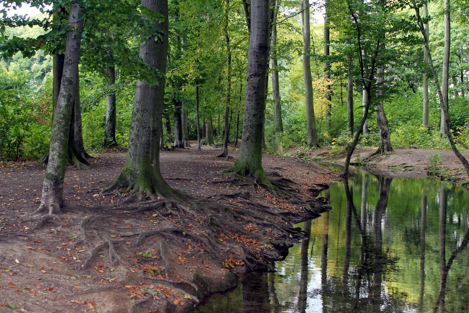 Stadtpark Köln Lindenthal