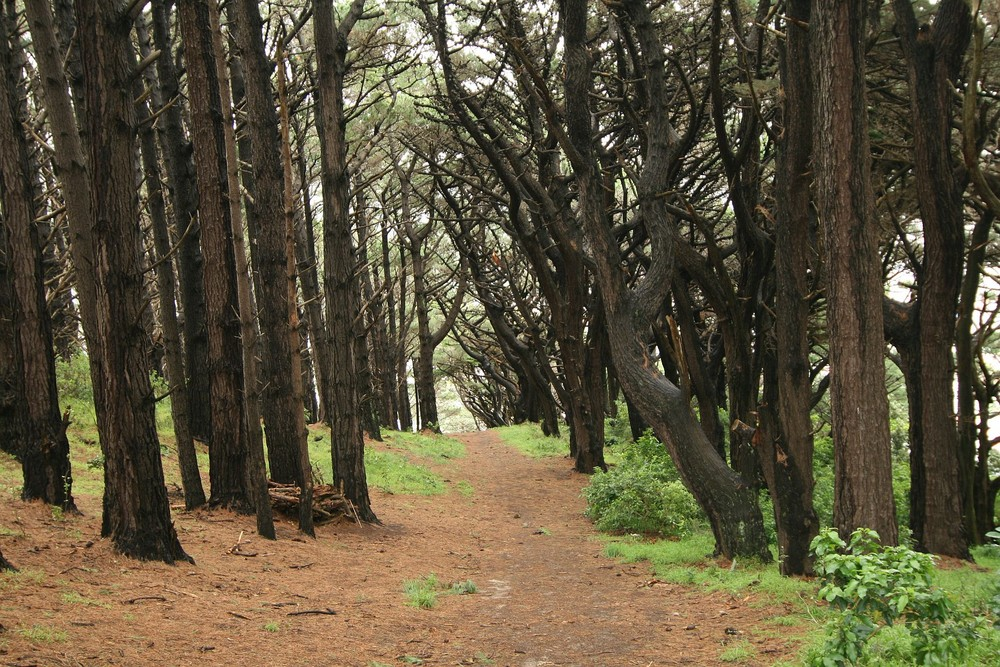 Stadtpark Wellington