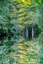 Stadtparksee im Herbst