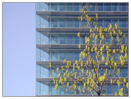 Stadttor mit Birke, Düsseldorf, März 2003