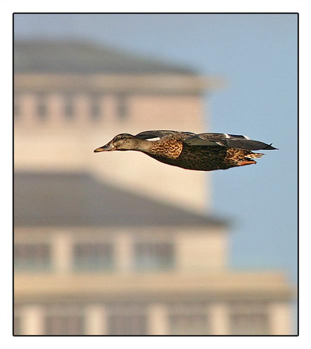 Stadtvögel II