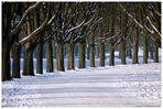 Stadtwald im Winter