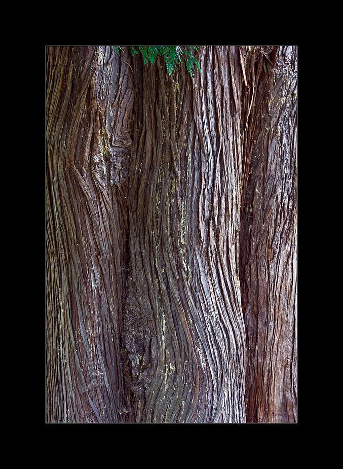 stämmig grün