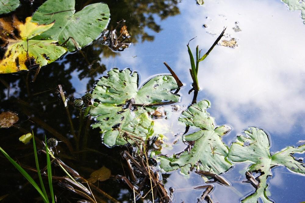 Stagno - Pond