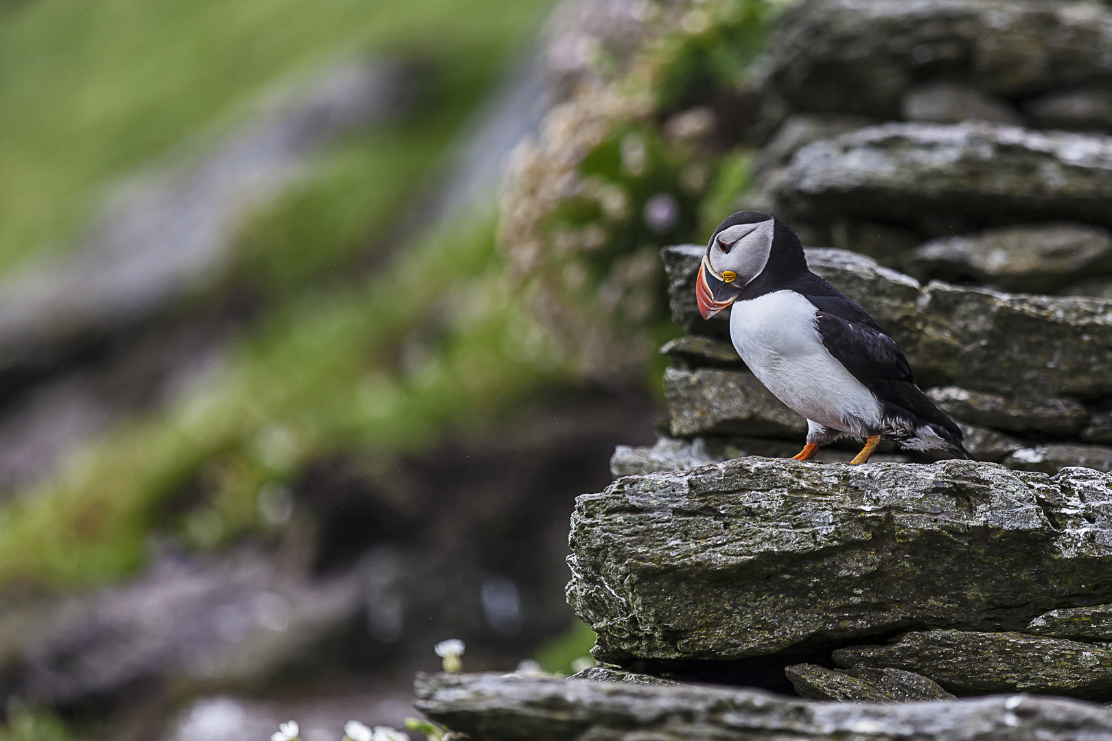 Stairway to the puffins...