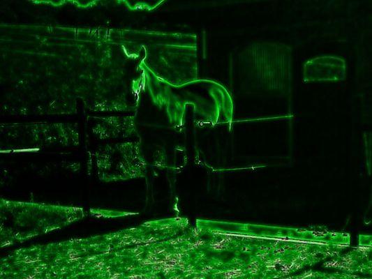 Stall durchs Nachtsichtgerät