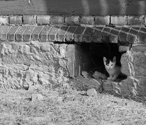 Stall-Kätzchen