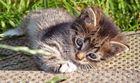 Stallkätzchen die Zweite