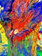 Stamm eines alten Kirschbaumes