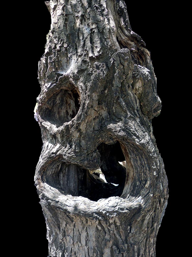 Stamm eines Walnussbaumes im Atlasgebirge