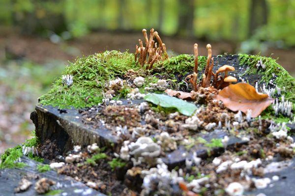Stamm voller Pilze