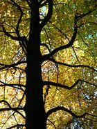 Stammdaten des Herbst