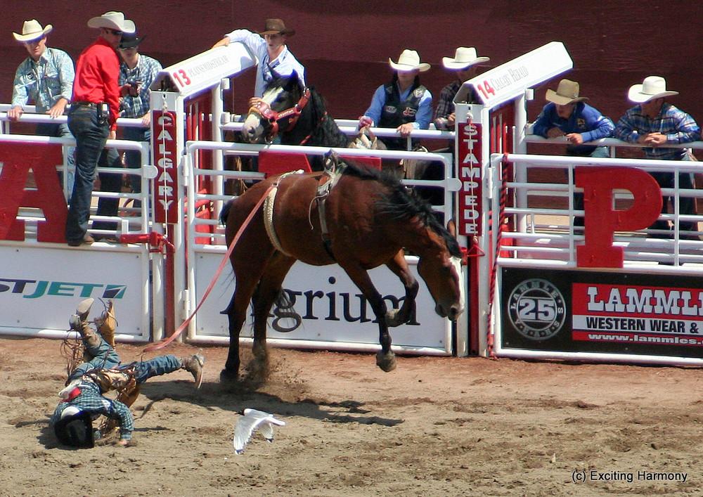 Stampede 2009 in Calgary