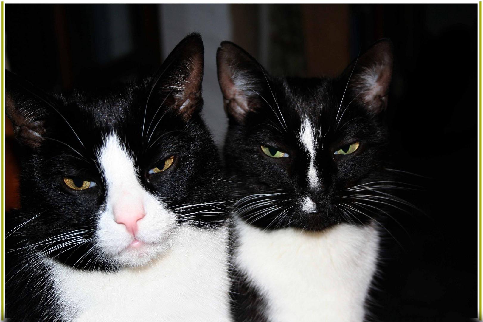 Stan und Olly