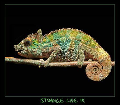 -- Stange Live IX --