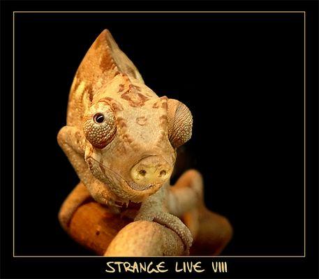 -- Stange Live VIII --