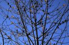 Stare im Baum