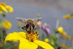 Stark sinkende Insekten Populationen