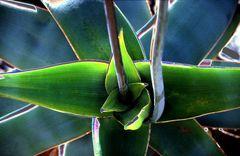 Starke Blätter