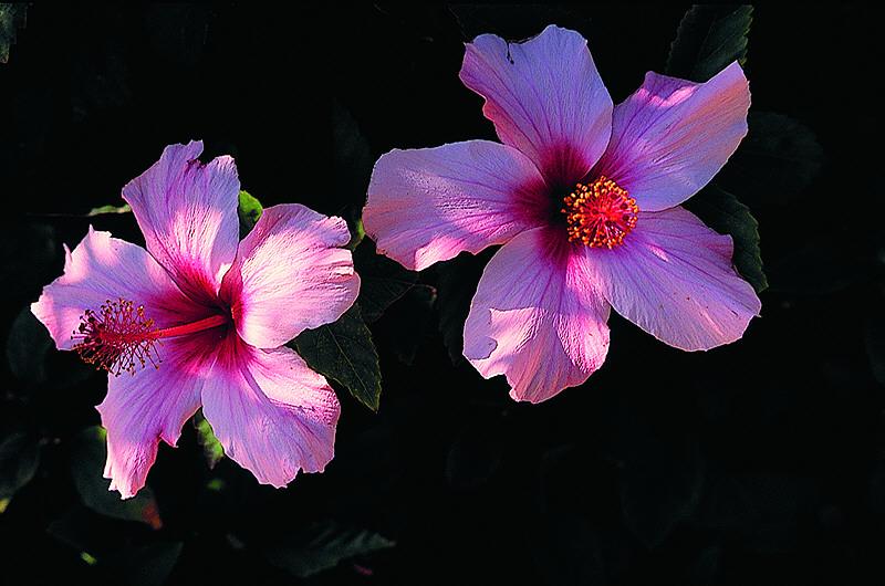 Starke Blumen...