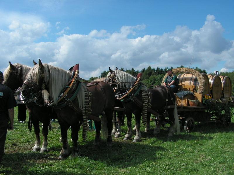 Starke Pferde