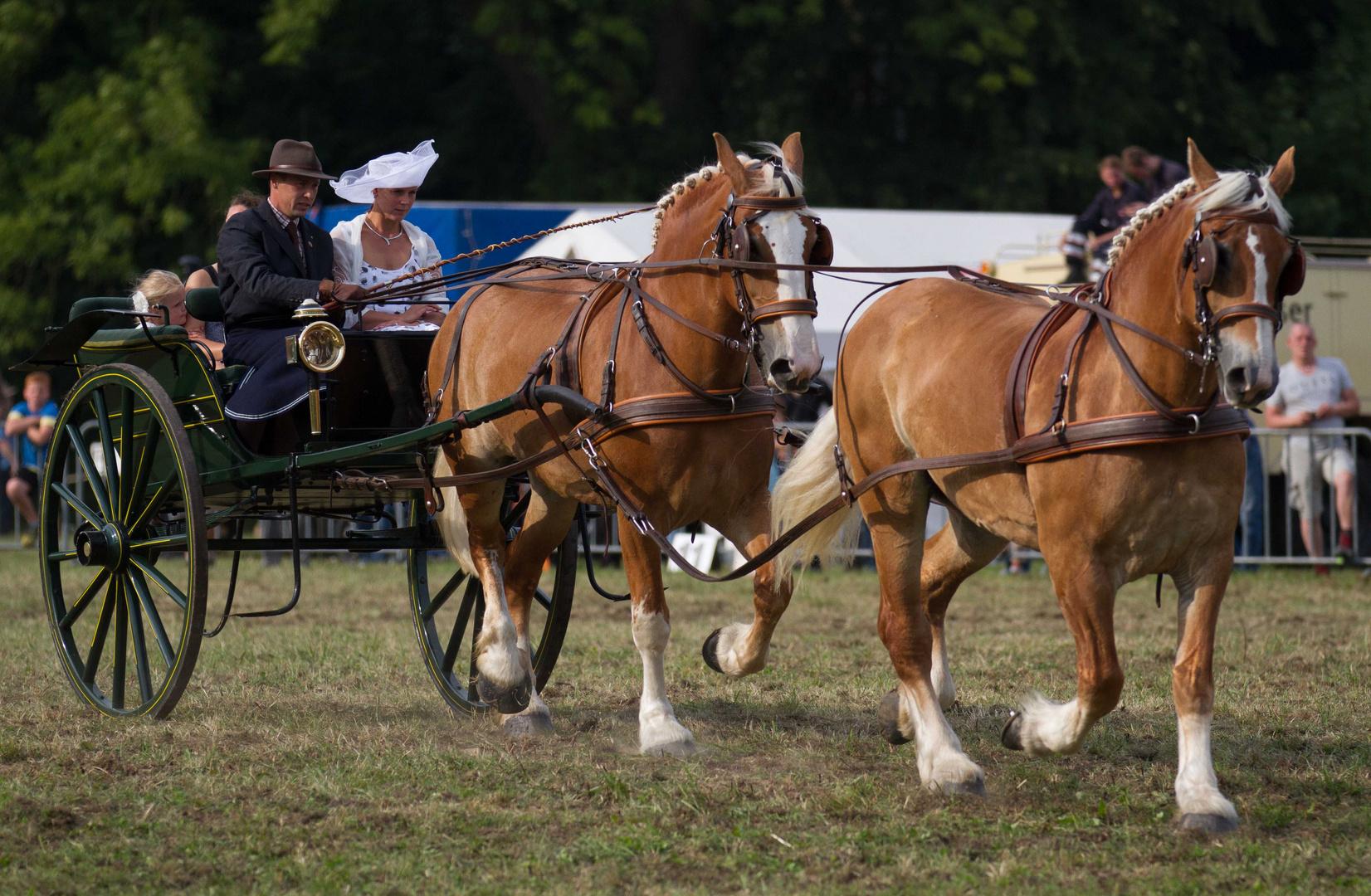 Starke Pferde I
