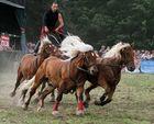 Starke Pferde II