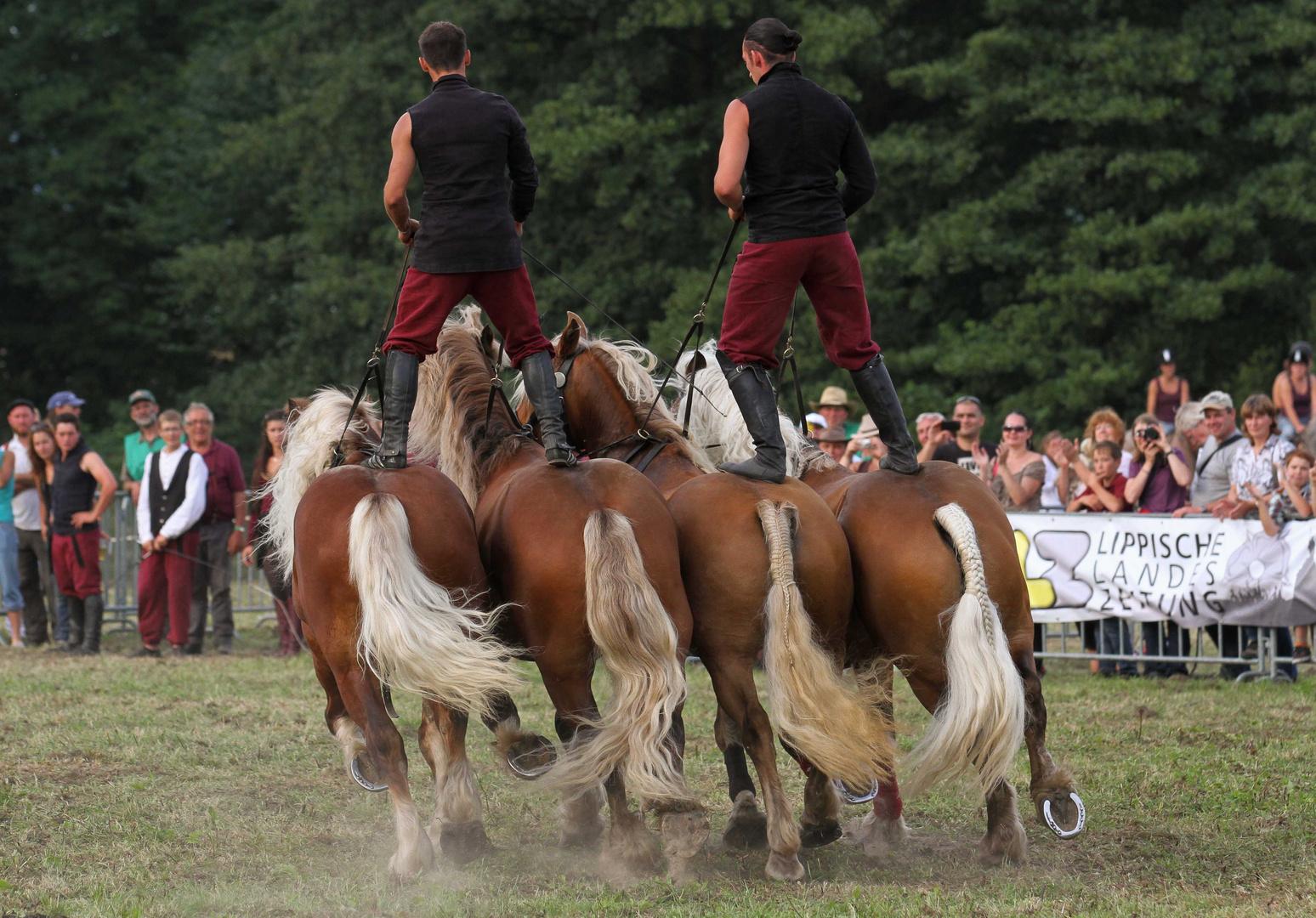 Starke Pferde III