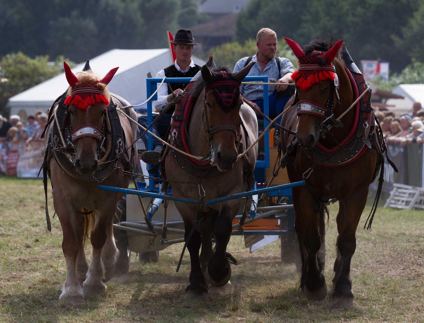 Starke Pferde VI