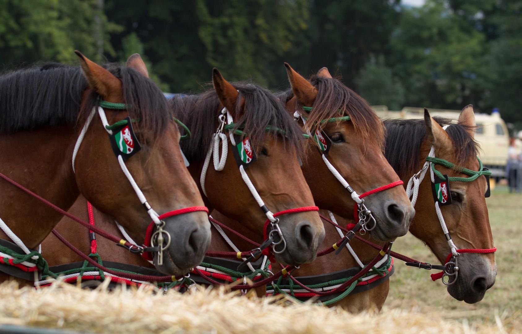 Starke Pferde VII