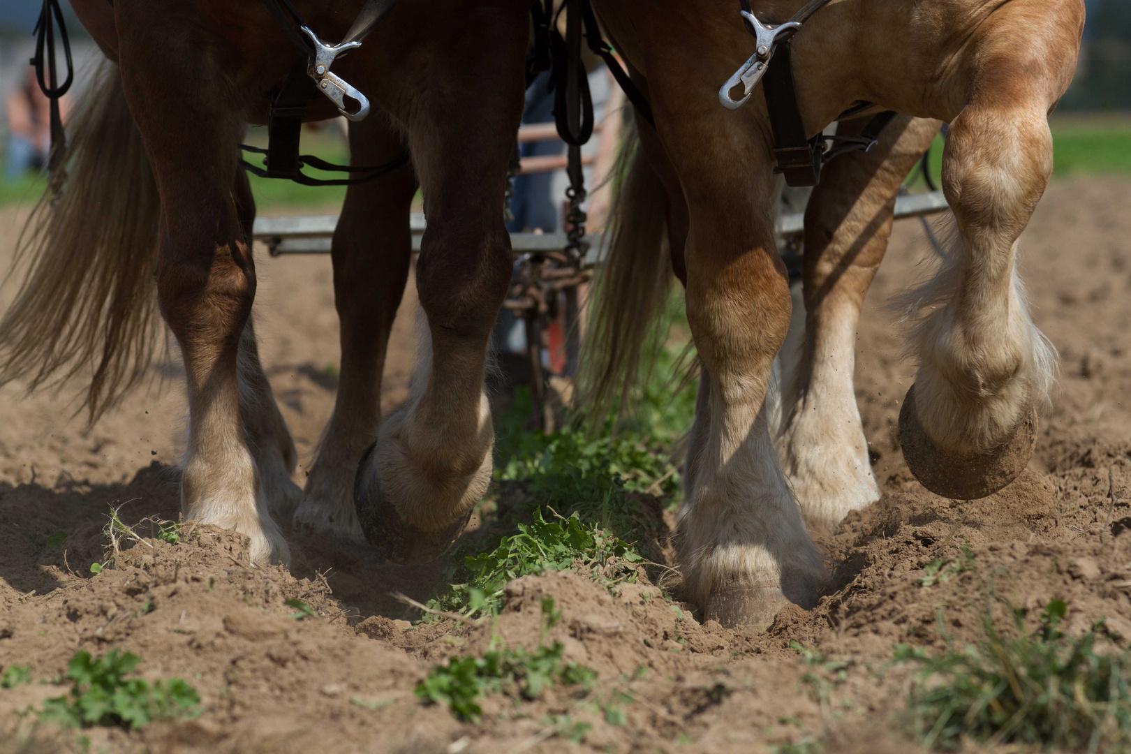 Starke Pferde VIII