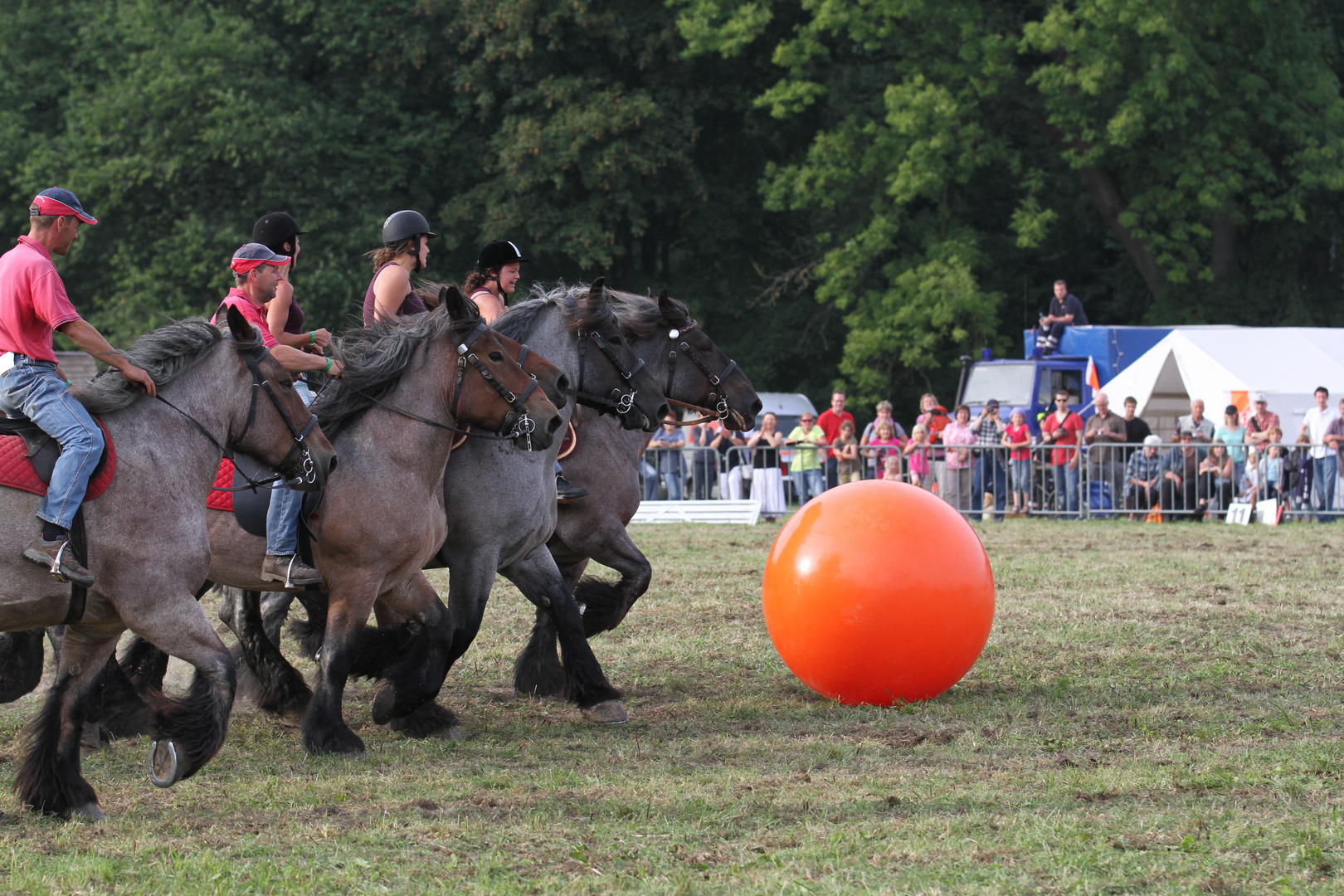 Starke Pferde XII