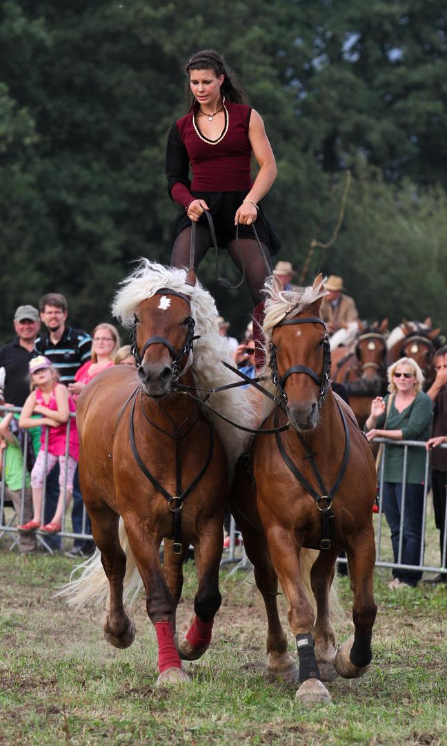 Starke Pferde XIII