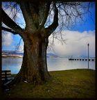 starker Baum