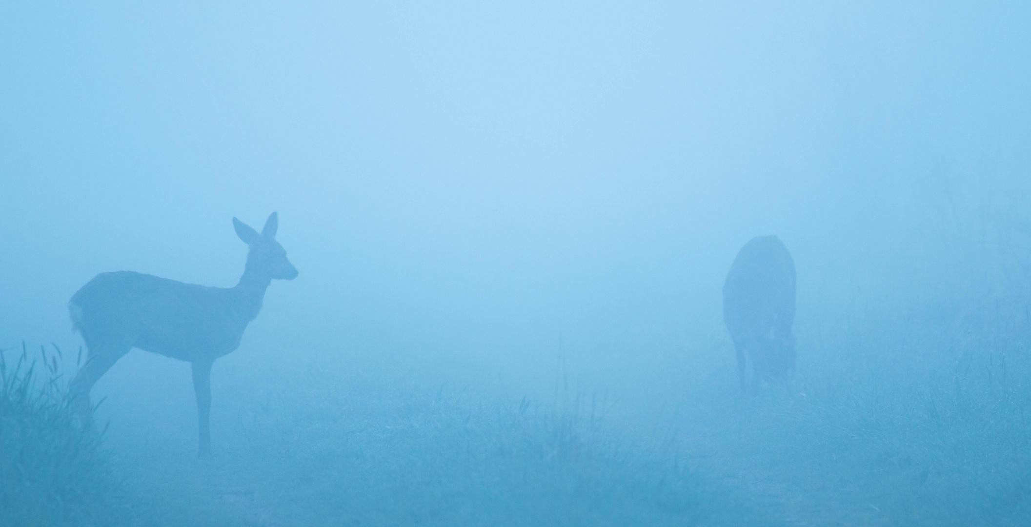 starker dichter Nebel