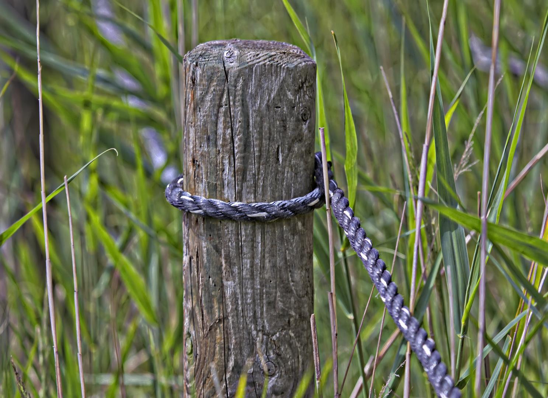 Starker Halt im samften Gras