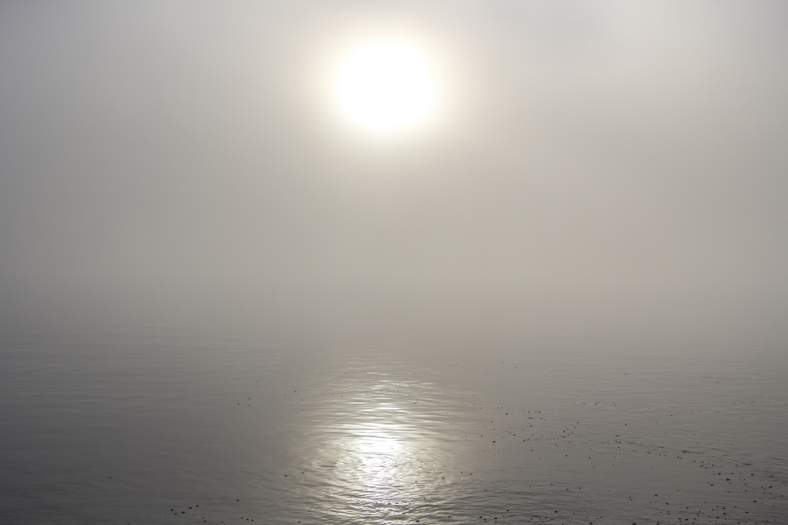 Starnberger See im Nebel