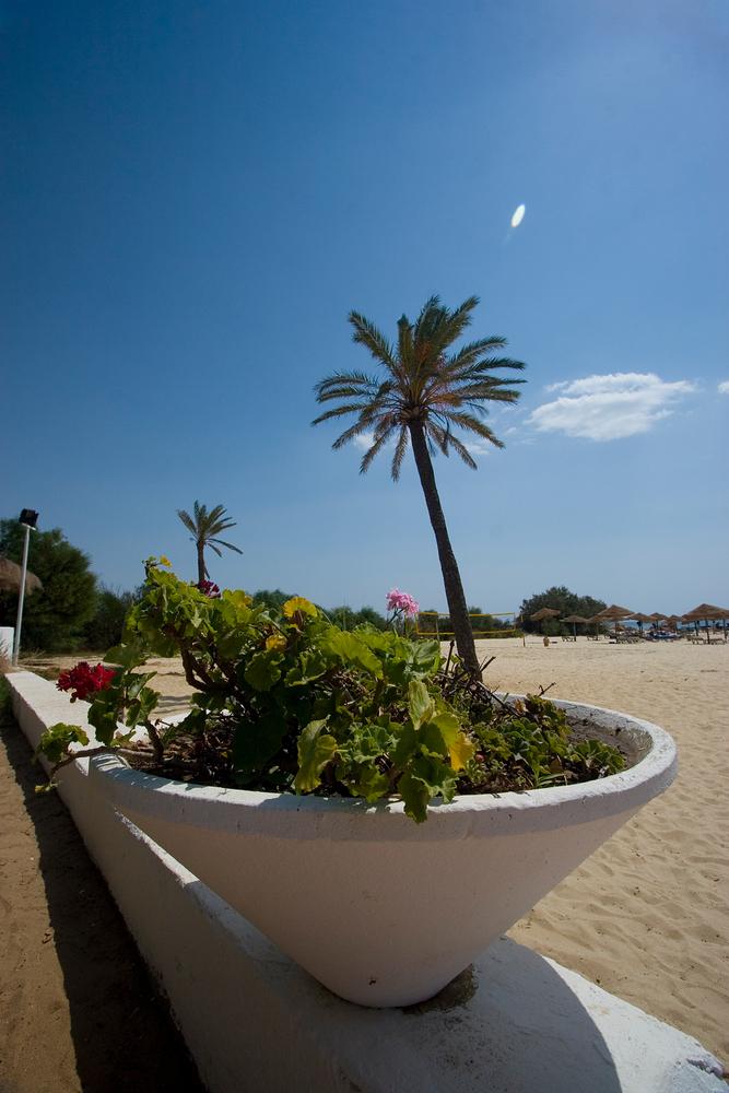 Starnd und Palmen am Meer 2 (TUN)