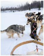 Start der Husky-Tour am Klimpfjäll im Norden Schwedens