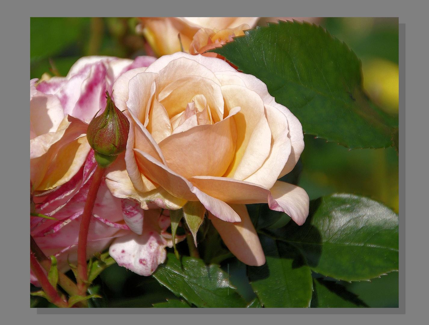 Statt Mittwochblümchen