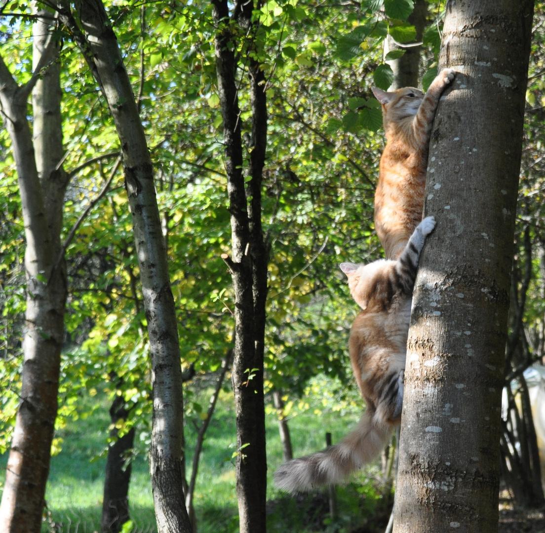 Stau am Baum
