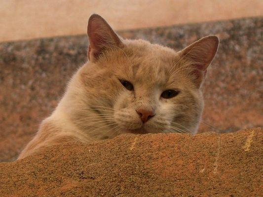 Staubige Katze