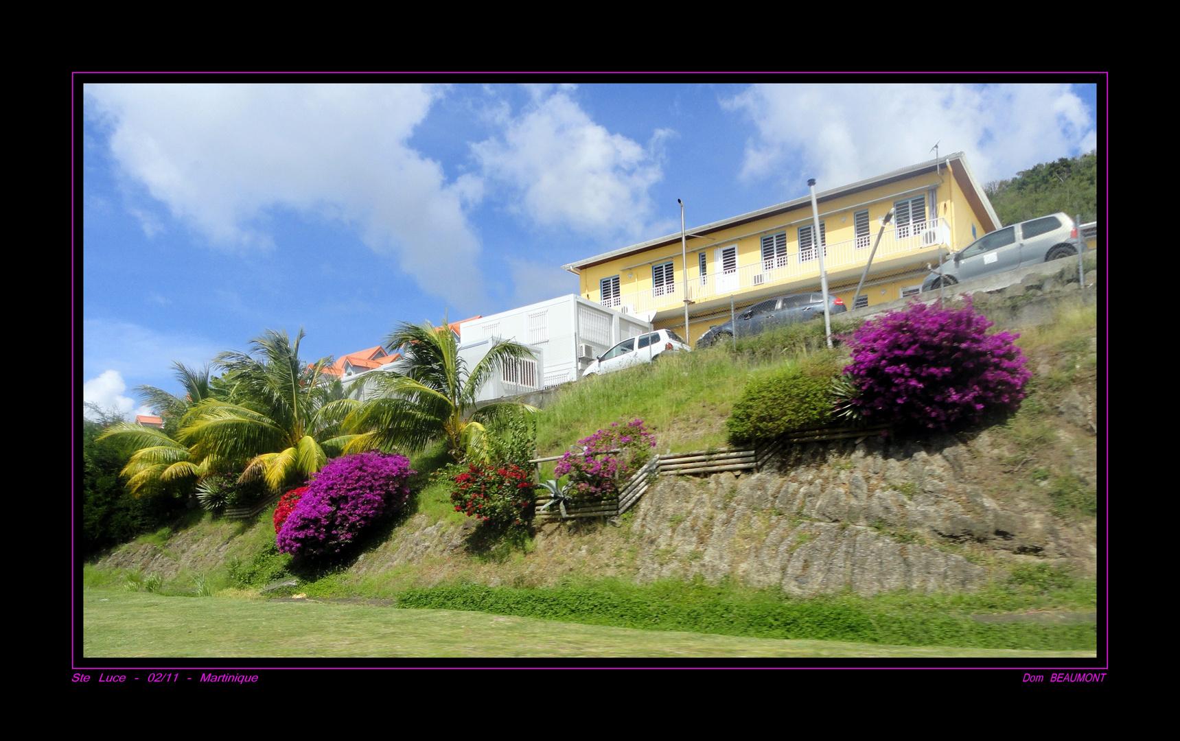 Ste Luce - Février 2011 - Martinique
