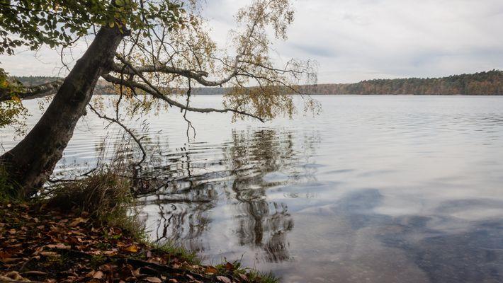 Stechlinsee im Herbst [1]